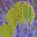 Wistful Wisteria by Diane