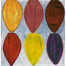 Cocoa Beans by Karen